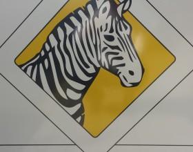 Път на зебрата в град Бургас